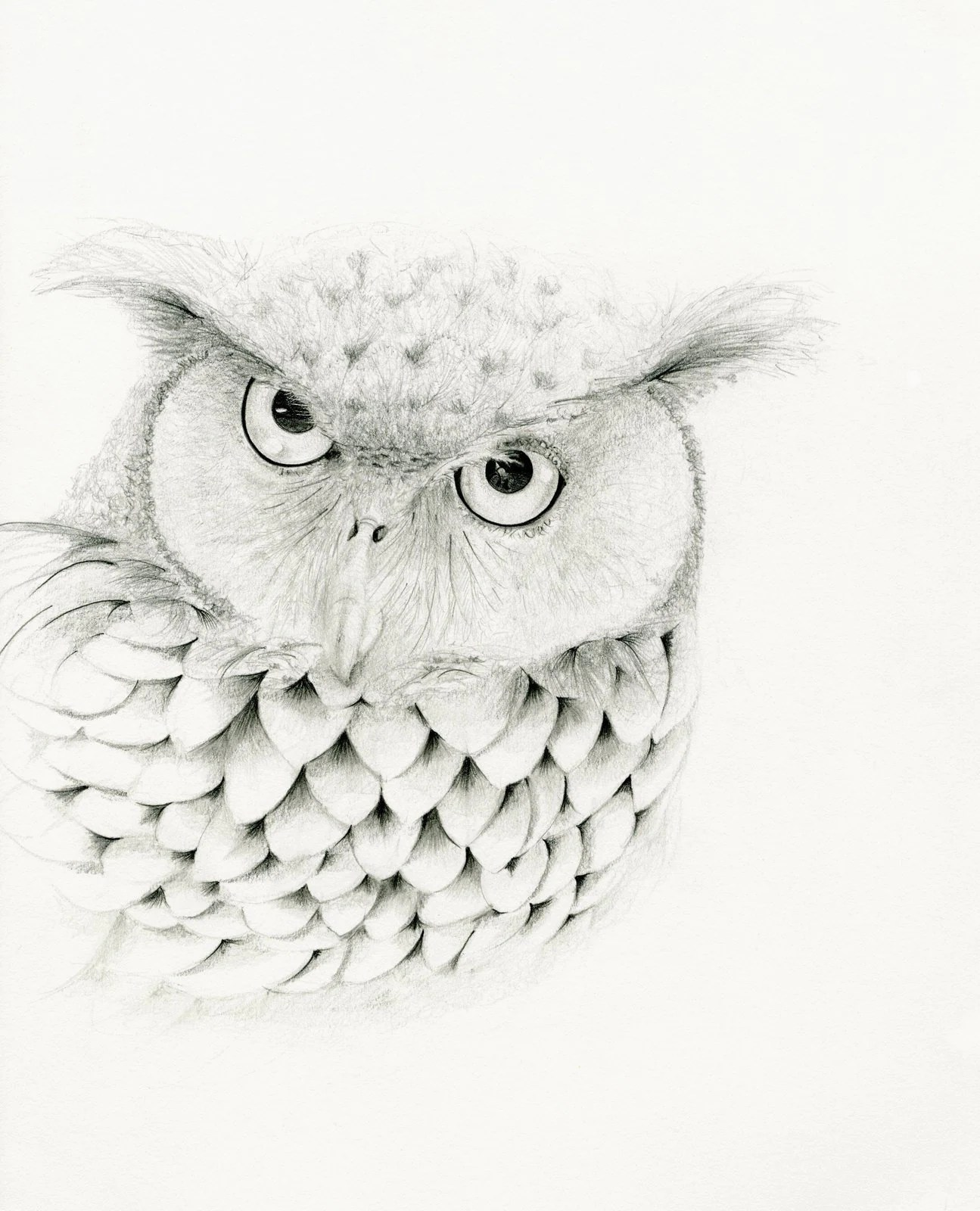 Owl Drawing Owl Art Print Fine Art Giclee Print Of My