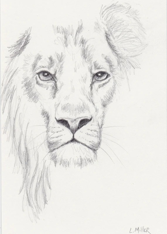Lion Pencil Drawing Original 5x7 Big Cat Sketch Lion Fine Etsy