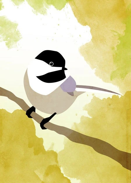 Sale! Black-capped Chicka...