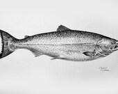 Salmon - Print