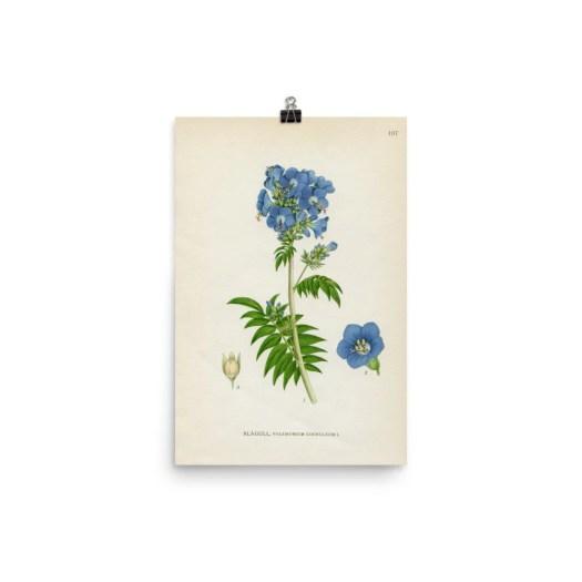 Vintage flower illustrati...