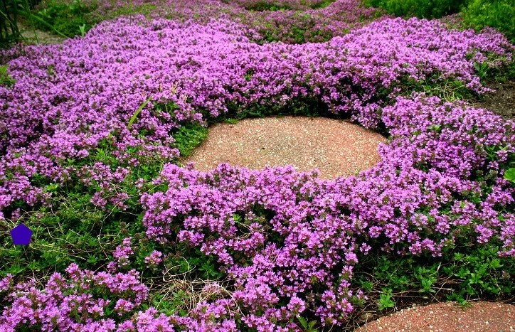 Ground Cover Etsy