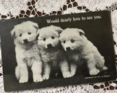 Antique 1911 Edwardian Black and White Art Postcard Post Card 1900s Would Dearly Love To See You  - Cute Fluffy Adorable Puppies Husky Dogs
