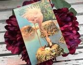 Antique Vintage 1930s A FLAMINGO Nesting At Hialeah Race Course MIAMI FLORIDA Greeting Postcard 1940s Pink Flamingo Eggs By Thomas R. West