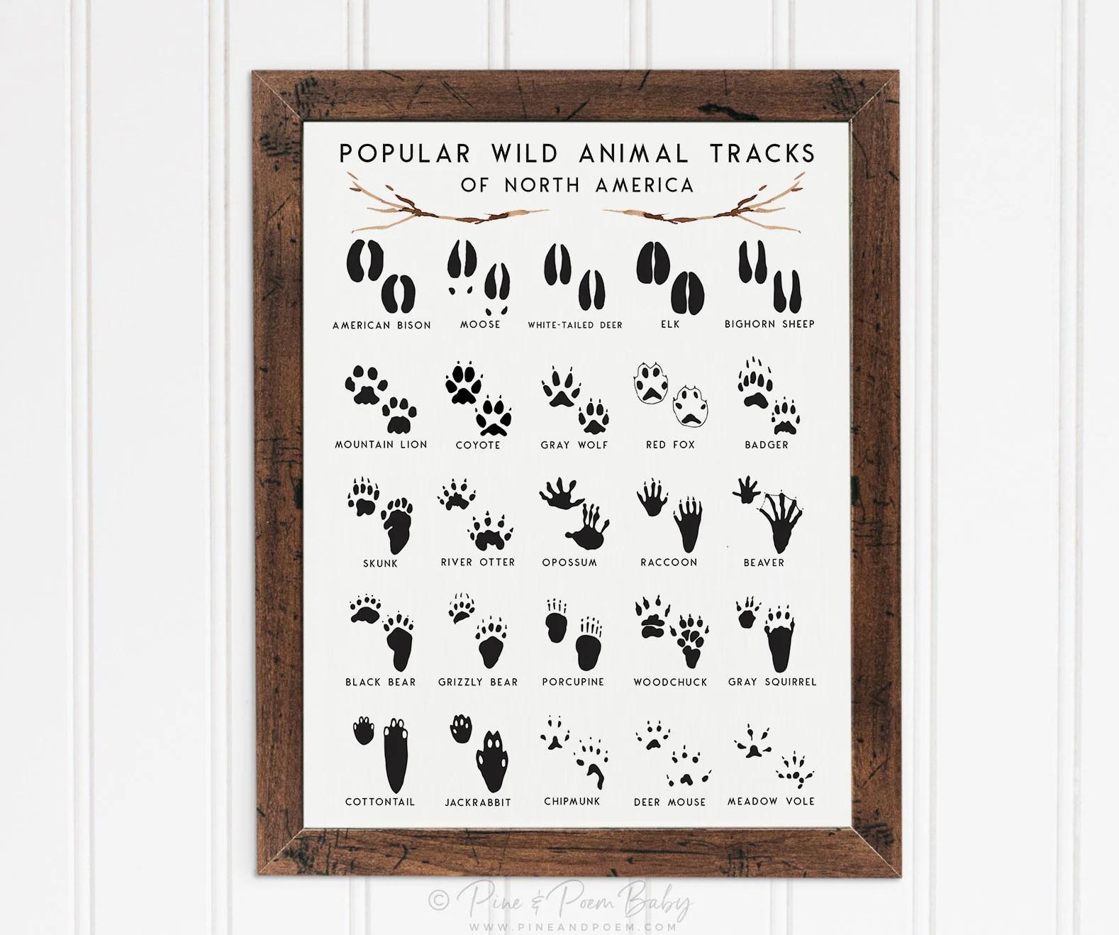Animal Tracks Nursery Print Adventure Woodland Decor