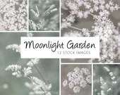 Moonlight Garden Photo Set, 4000px by 3000px, instant stock photo download
