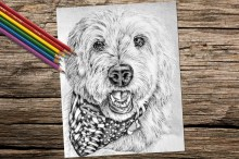 Mini Goldendoodle Coloring Pages