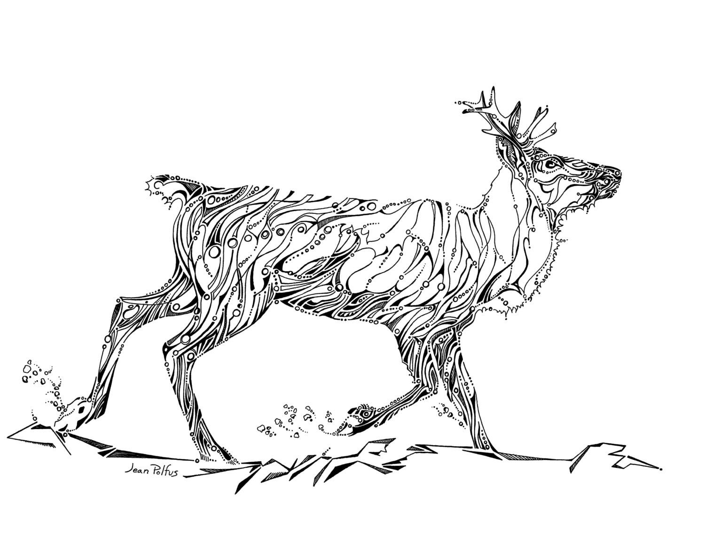 Woodland Caribou Drawing Caribou Illustration Black And