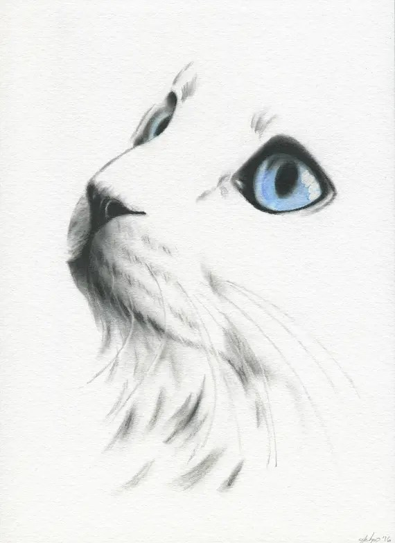 White Cat With Blue Eyes Cat Sketch Charcoal Cat Drawing Etsy