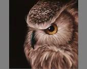 "Art PRINT - Great Horned Owl Bird of Prey Dark Brown Ornithology Animal Wall Art - Choose Size 8x8"", 10x10"" 12x12"" PRINTS"