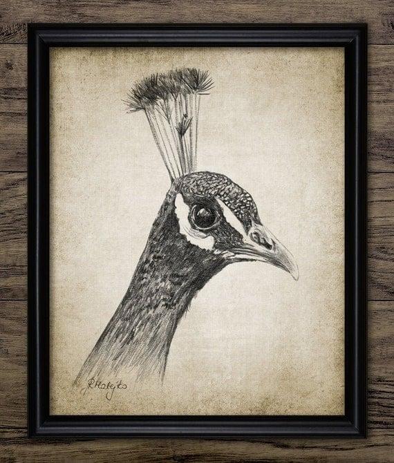 Peacock Pencil Drawing Printable Peacock Drawing Peacock | Etsy