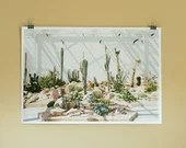 Large photo print of cacti, wall art
