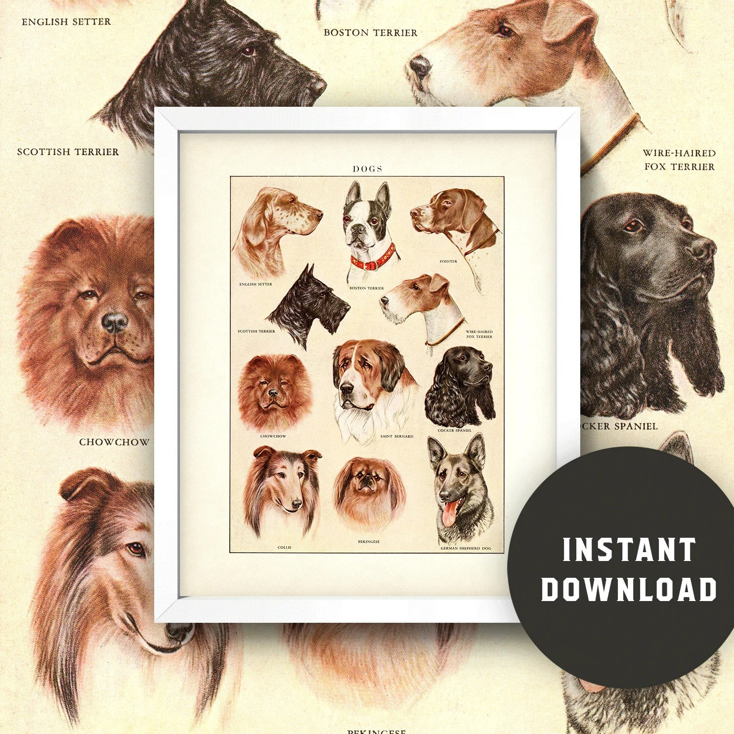 Vintage Dog Breeds Chart Print 8x10 Kitchen Wall Art