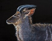 Greater Kudu Portrait - o...