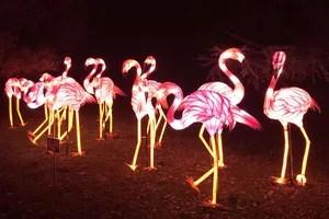 Nachtbesprechung mit einer Gruppe von Flamingos, mehr als das Leben in der Menagerie des Jardin des Plantes.