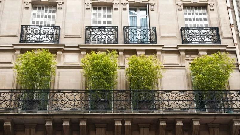 quels types de bambou planter sur un balcon
