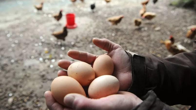 Des oeufs bio, catégorie la plus consommée dans les produits bio, provenant d'un mode de production fermier.