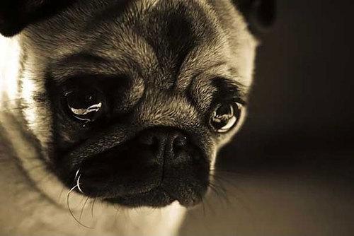 photo crying puppy_zpsmiluynuc.jpg