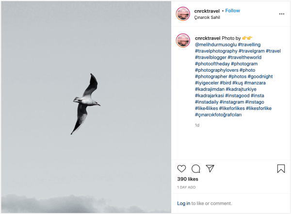 Instagram post with a photo of a bird and the hashtag #instagram
