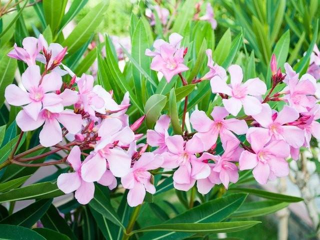 0zEA1Z Dünyaca Ünlü En Zehirli 5 Tane Bitki Hangisi?