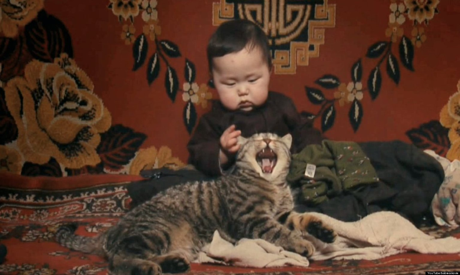 Babies And Animals Playing Together Video