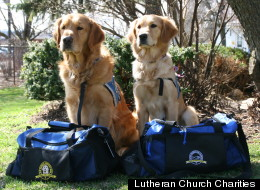 Boston Dogs Newtown