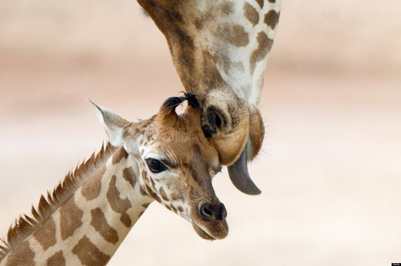 Baby Animals And Mothers 50 Super Cute Babies And Their