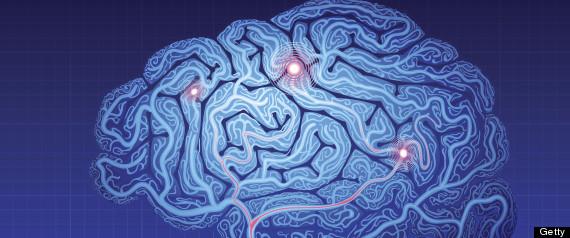 3d brain map