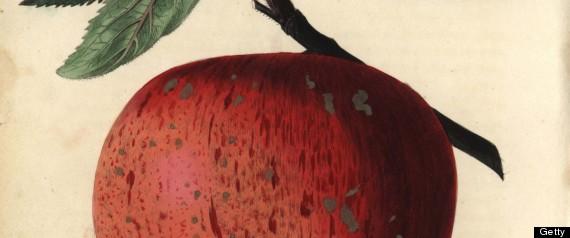 apple health information