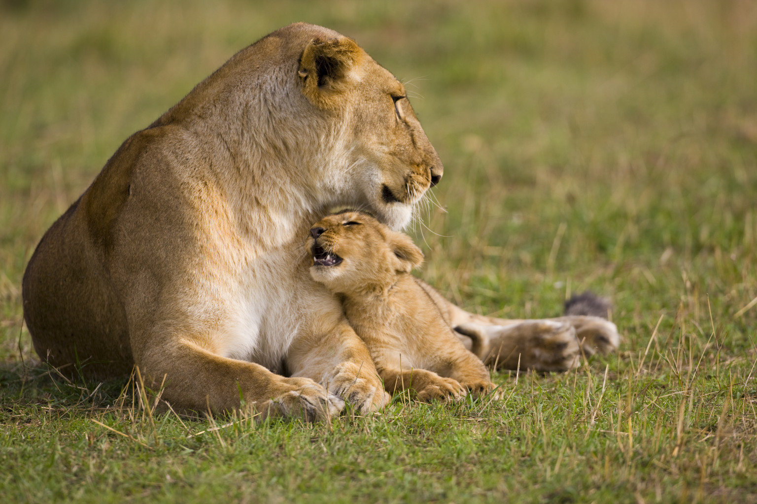 Mammals May Choose Of Offspring As Mothers Bo S