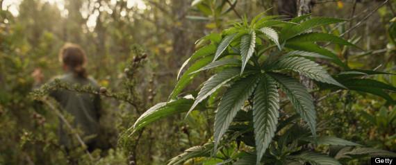 Marijuana Pollution