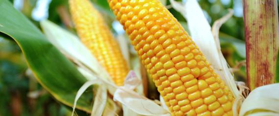 OGM INTERDICTION