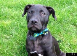Brad Montgomery dog