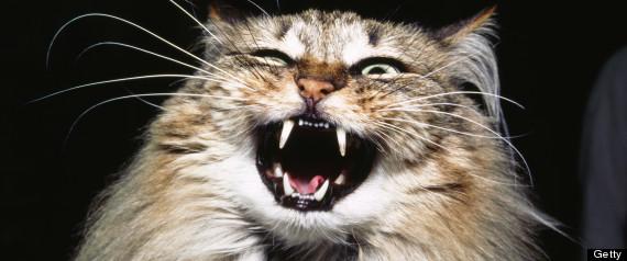 r HISSING CAT large570 Mujer muere, sus mascotas sobreviven comiéndosela [Trágica de UK]