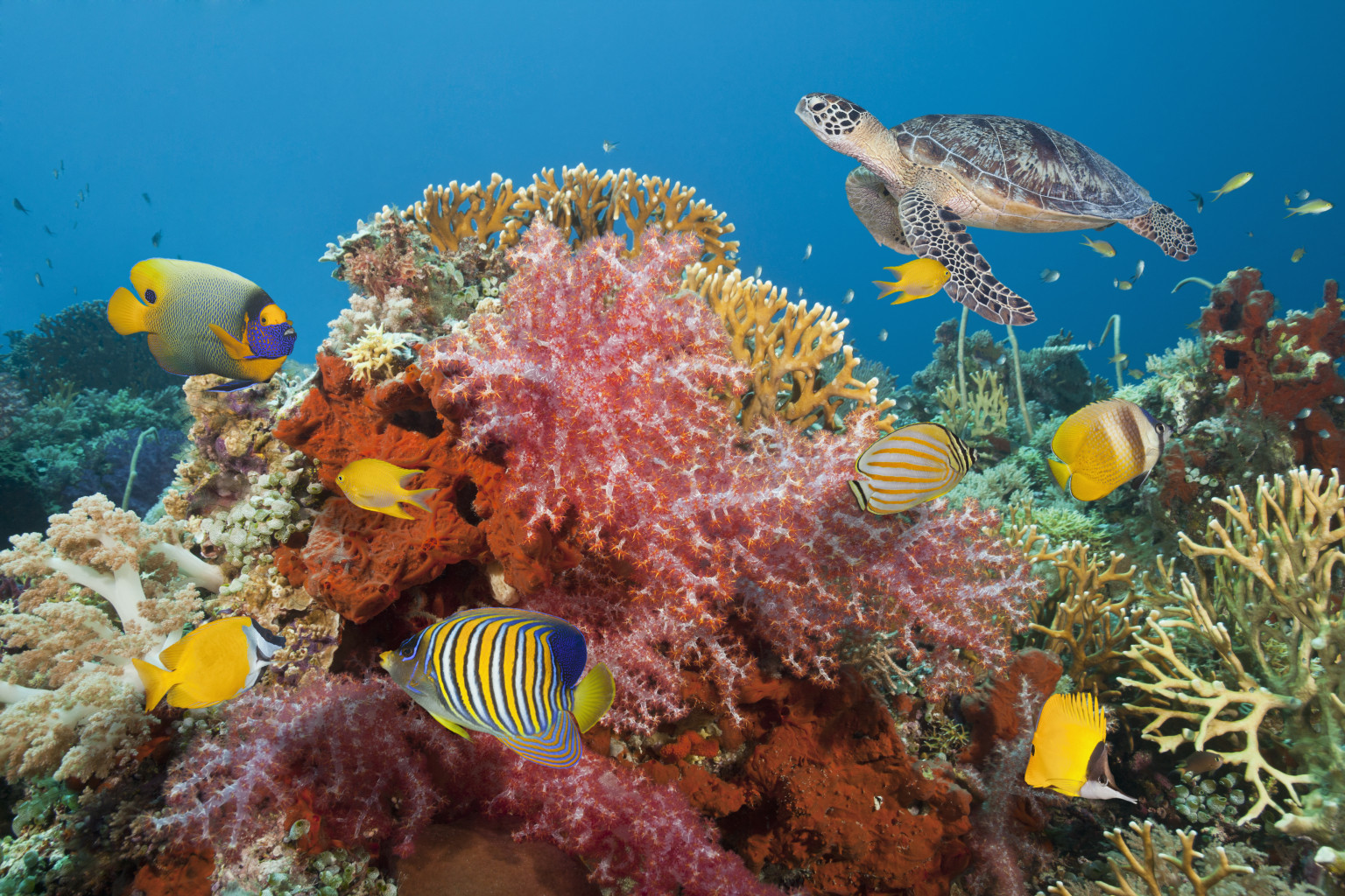Saving The World S Coral One Reef At A Time