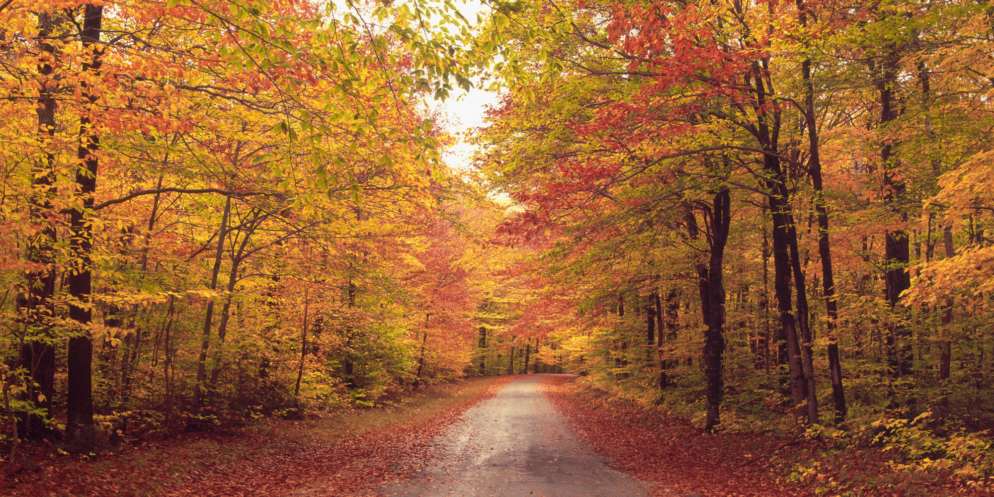 12 Reasons To Look Forward To Fall