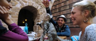 Humans and Felines Enjoy the Cat Cafe Le Cafe des Chats