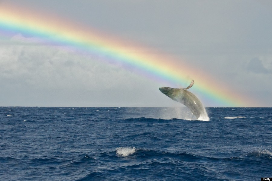 rainbow hawaii