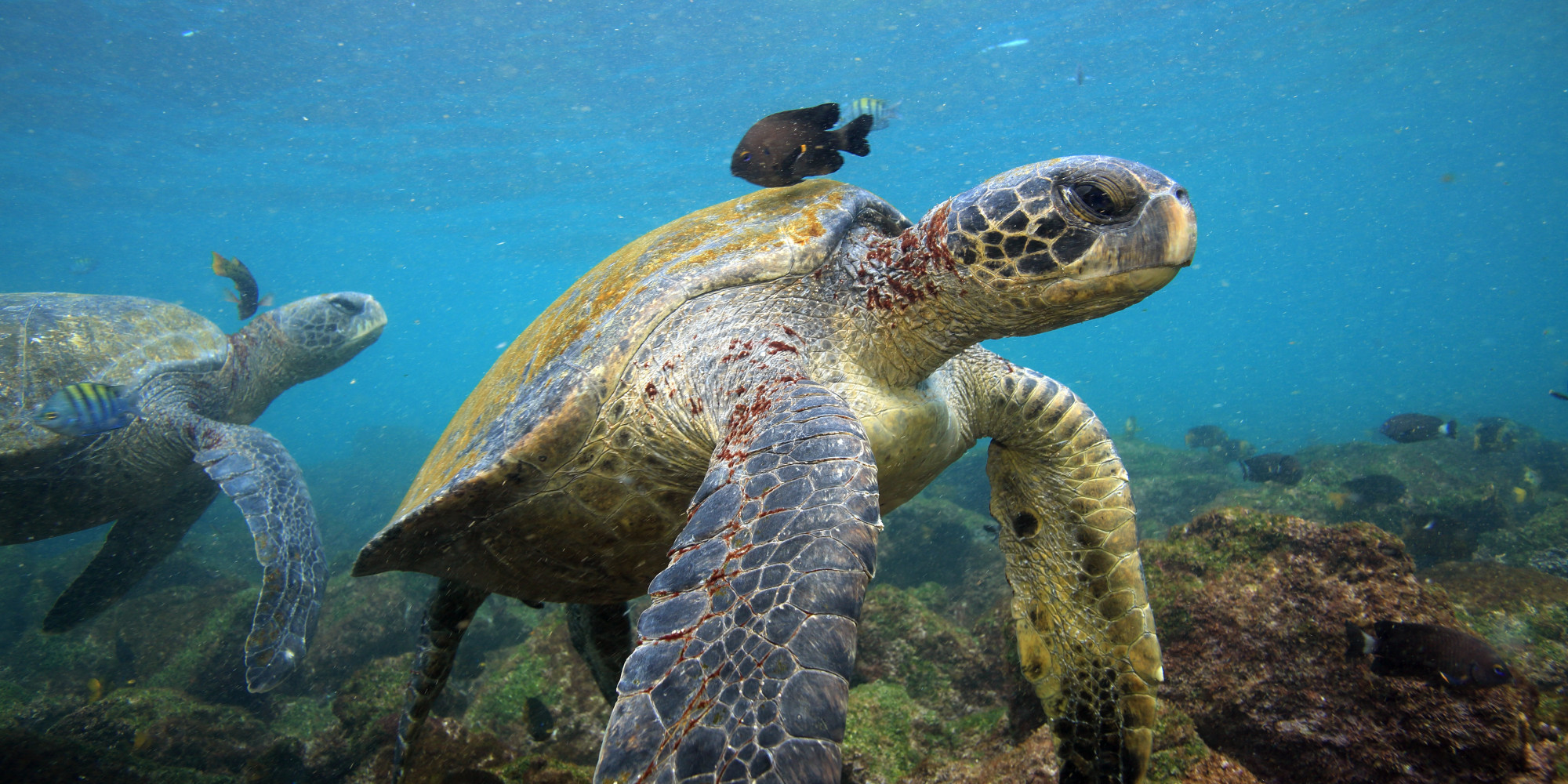 7 Reasons To Include Galapagos Islands On Your Bucket List