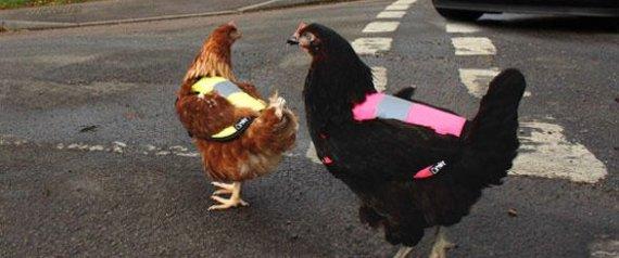 High-Vis Chicken Jacket