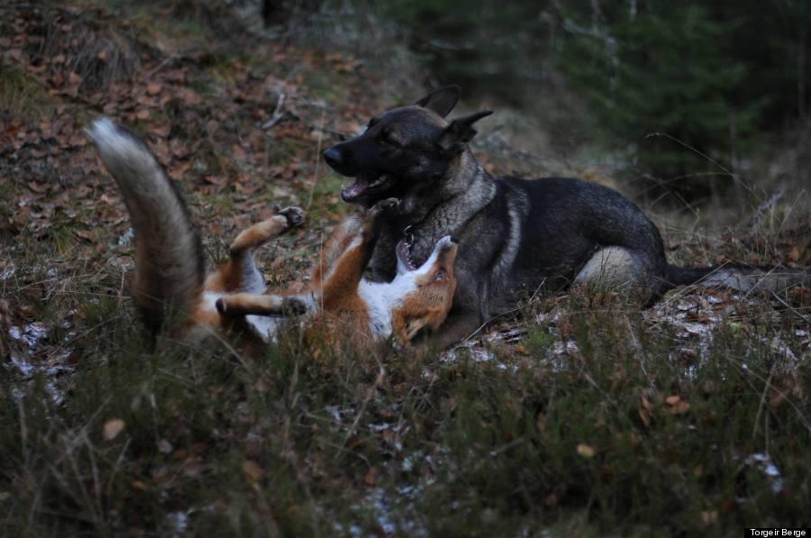 fox13