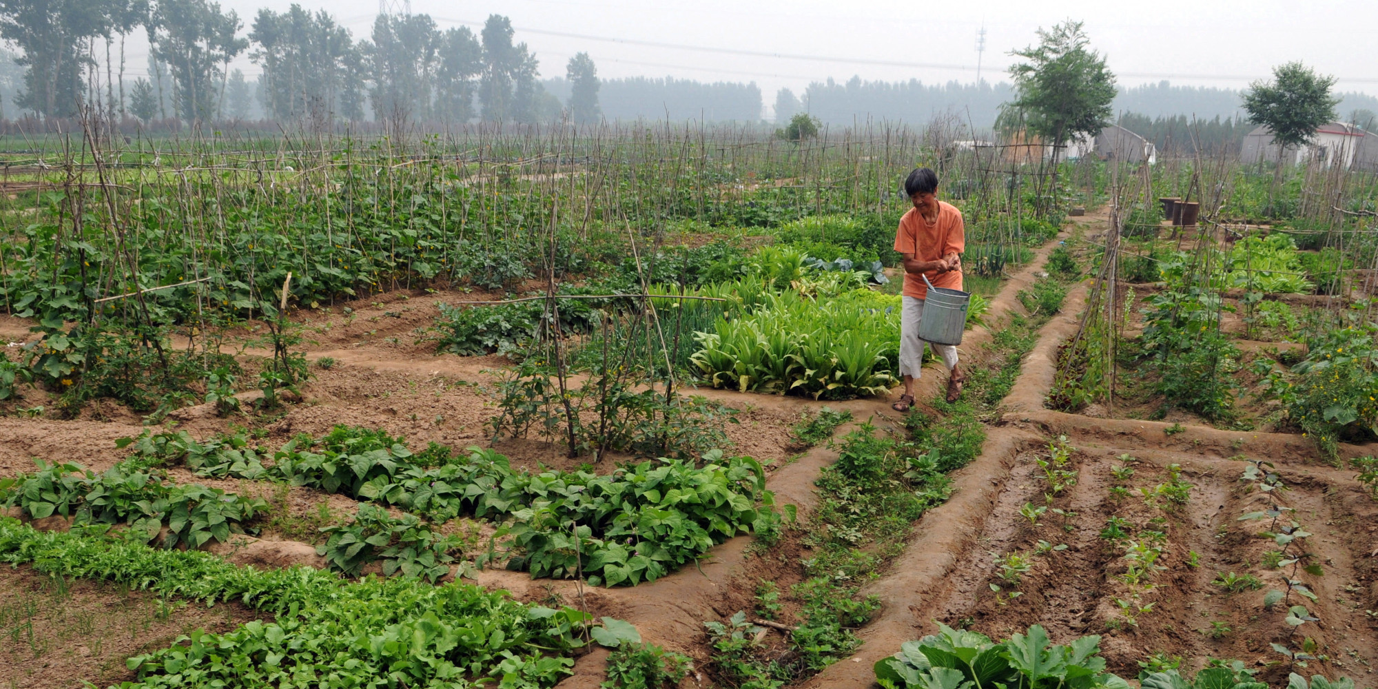 Un Report Says Small Scale Organic Farming Only Way To