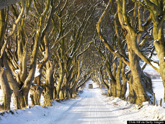 Irelands Dark Hedges Is The Most Mystifyingly Cool Road