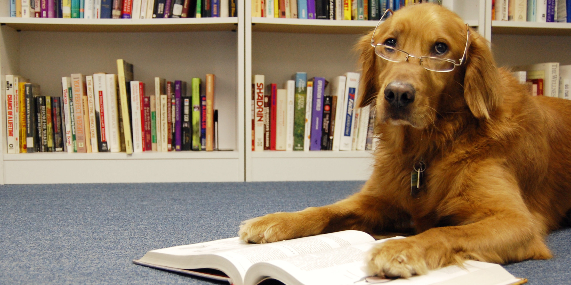 Reading Books To Shelter Dogs Makes The World A Little Bit