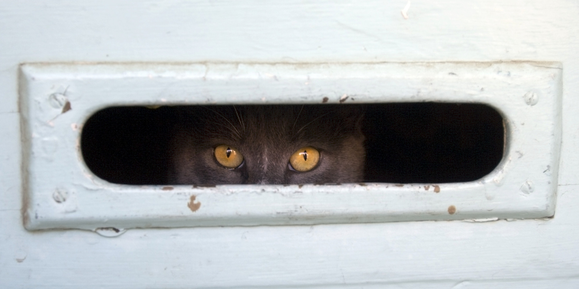 The Mailman Is No Match For This Cat S Epic Mail Slot