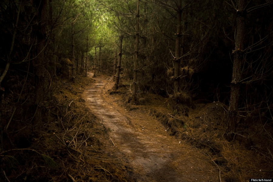 sherwood forest nottinghamshire