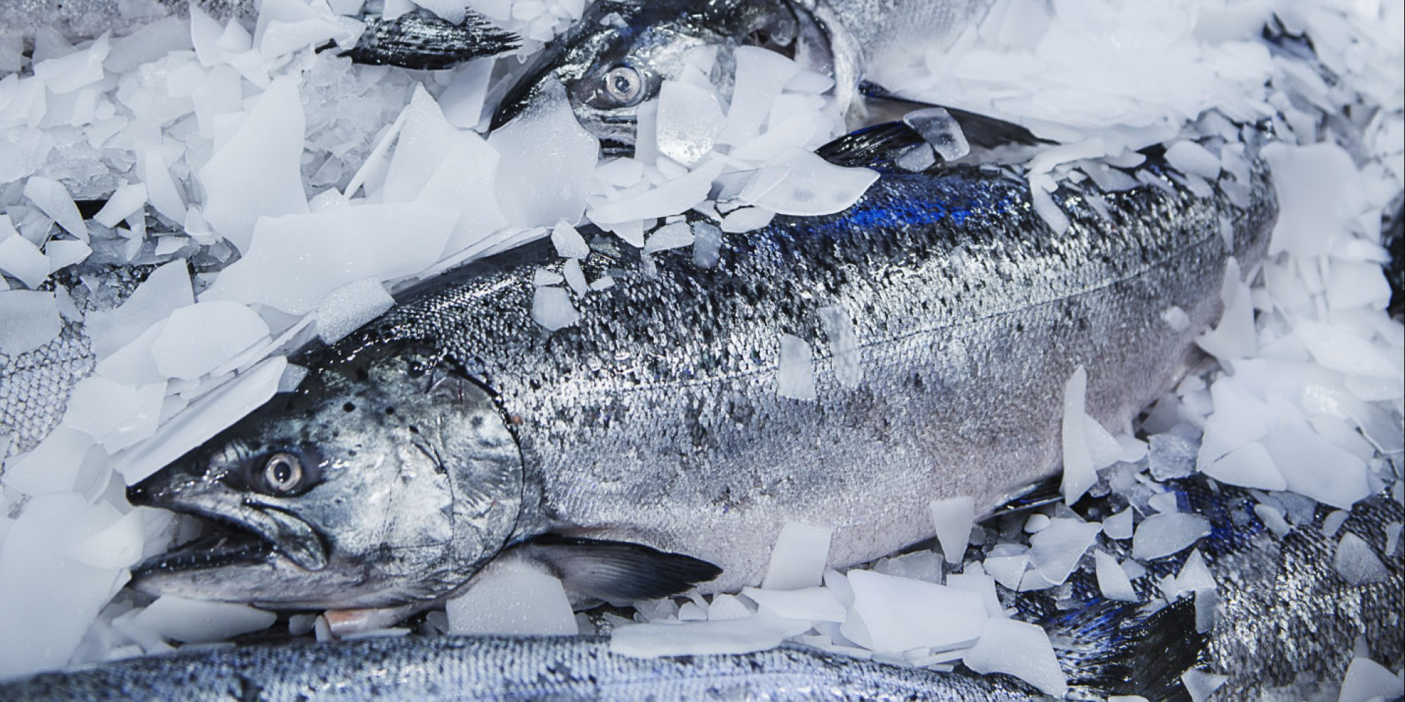 How To Get More Fresh Fish In Yourt