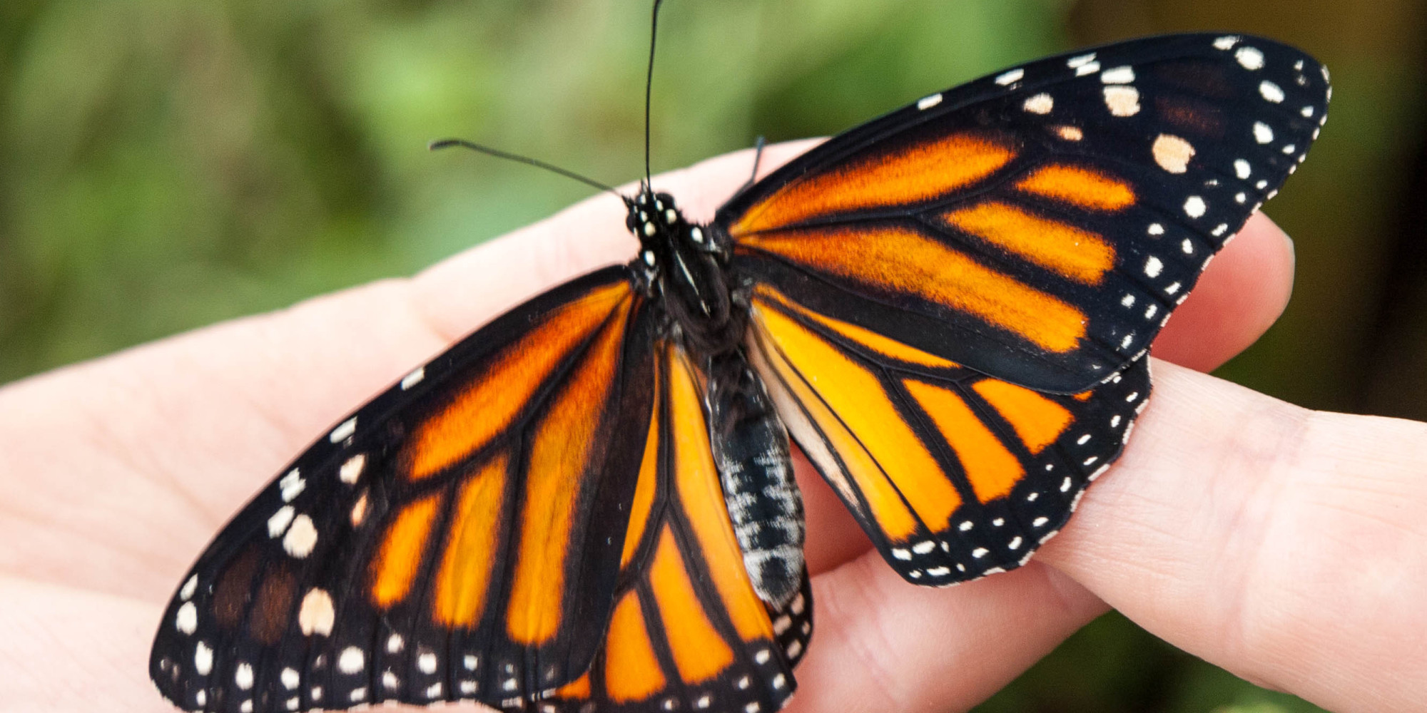 What Butterflies Can Teach Us About Embracing Change