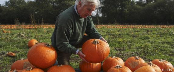 cosecha halloween