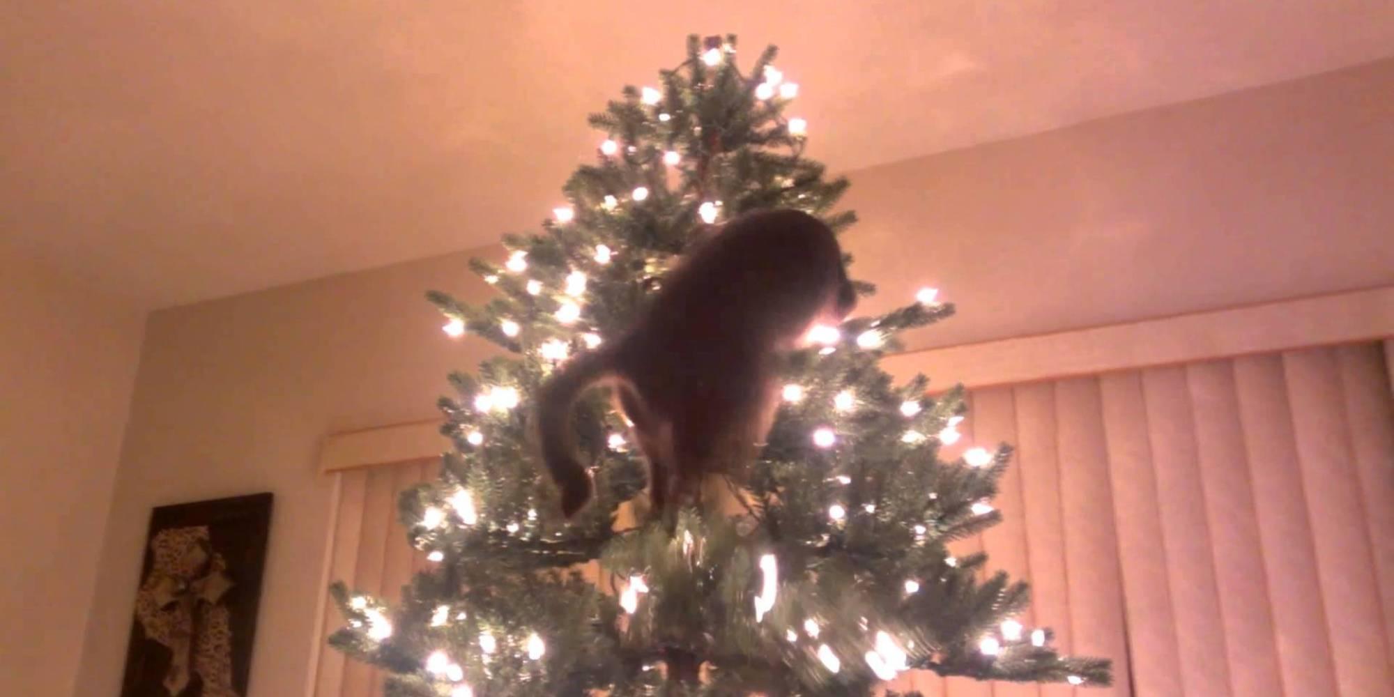 Cats Vs Christmas Trees A Compilation HuffPost UK